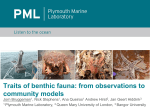 Traits of benthic fauna: from observations to community models