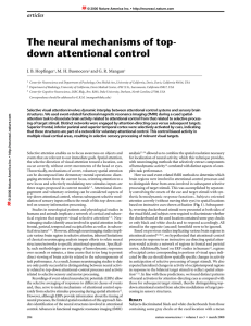 The neural mechanisms of top- down attentional control
