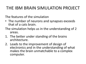 the ibm brain simulator project