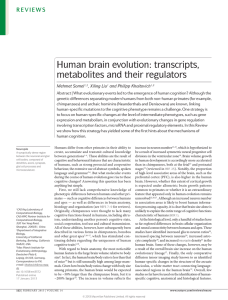 Human brain evolution: transcripts, metabolites and their regulators