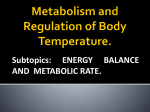 Nutritional Principles and Energy Metabolism.