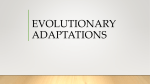 evolutionary adaptations