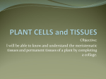 PLANT CELLS and TISSUES