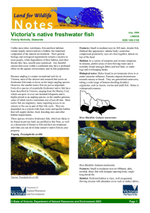 Victoria`s native freshwater fish