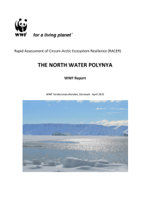 the north water polynya