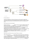 BY 124 SI 10/01/15 The clade or phylogeny tree is the tree Dr. Raut