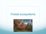 Forest ecosystems - geo