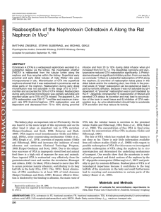Reabsorption of the Nephrotoxin Ochratoxin A Along the Rat