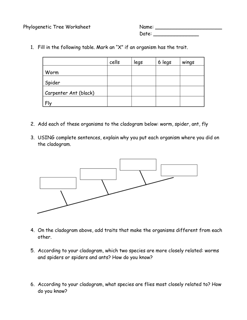 Worksheets Cladogram Worksheet Answers 005867721 1 9a3d25747eb3f5bc90aab00b85afa6b3 png