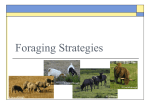 Foraging Strategies