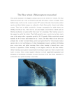 The Blue whale(Balaenoptera musculus)