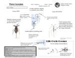 water scorpion.pub (Read-Only)