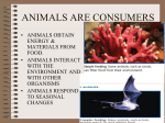 ANIMALS ARE CONSUMERS