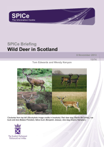 Wild Deer in Scotland