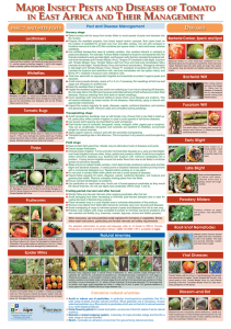 major insect pests and diseases of tomato in east africa