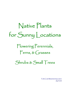 Native Plants for Sunny Locations