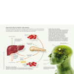 insulin`s role in body and brain