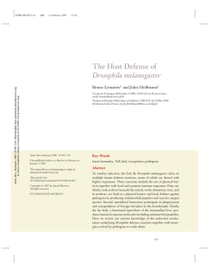 The Host Defense of Drosophila melanogaster