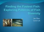 Finding the Fastest Fish: Exploring Patterns of