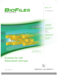 Enzymes for Cell Dissociation and Lysis - Sigma