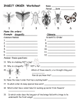 INSECT ORDER Worksheet Name