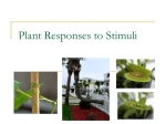 Plant Responses to Stimuli