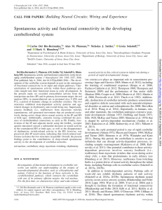 Spontaneous activity and functional connectivity in the developing