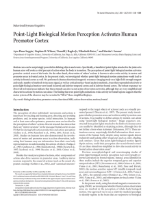 Point-Light Biological Motion Perception Activates Human Premotor