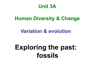 Fossils - Our eclass community