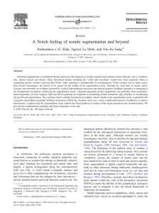 A Notch feeling of somite segmentation and beyond