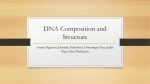 DNA Composition and Structure