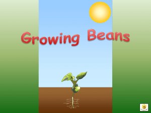 Growing Beans - Communication4All