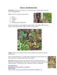 Poison Ivy Identification Sheet