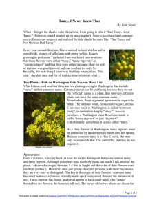 Tansy, I Never Knew Thee - Plant Steward Home Page