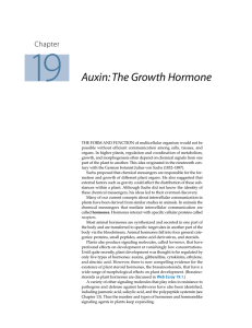 Auxin: The Growth Hormone - Roberto Cezar | Fisiologista Vegetal