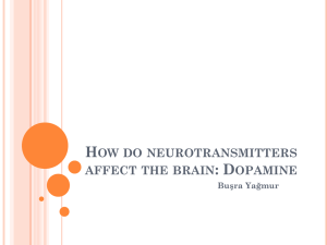 How do neurotransmitters affect the brain: Dopamine