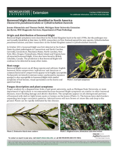 Boxwood blight disease identified in North America