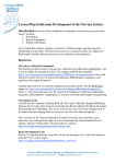 Lesson Plan-Embryonic Development of the Nervous System