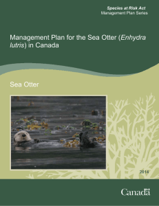 Management Plan for the Sea Otter (Enhydra lutris) in Canada Sea