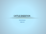 Cattle Digestion - CHS Science Department Mrs. Davis