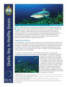 Sharks: Key to Healthy Oceans