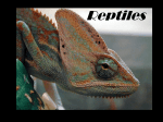 pwpt reptiles