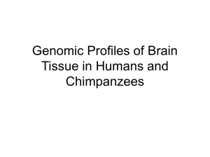 Genomic Profiles of Brain Tissue in Humans and