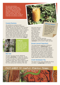 FACT SHEET 12 Useful Plants: Trees