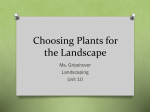 Choosing Plants for the Landscape
