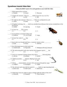 Eyewitness Insects Video Quiz