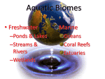 highest species diversity of all fresh water ecosystems.