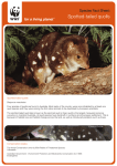Spotted-tailed quolls - WWF