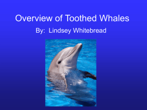 Overview of Toothed Whales