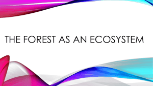 The forest as an ecosystem
